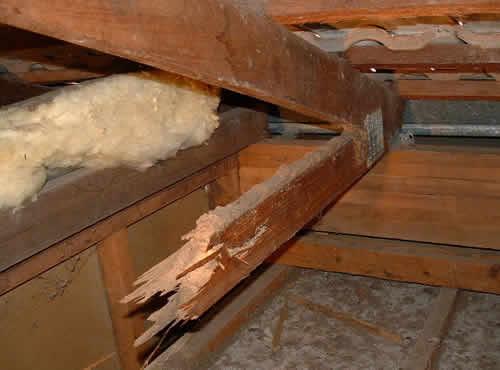 Green Termite Bait Systems Termite Prevention Termite