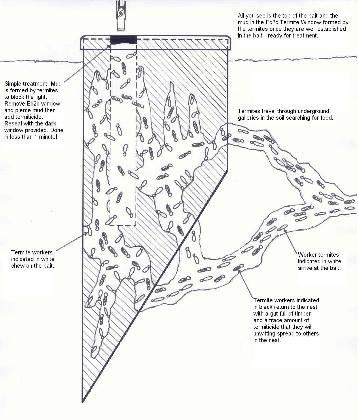 Bait with termites1