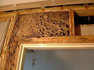 Nest  above bathroom